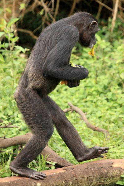 Уганда 5X8B Туристические достопримечательности