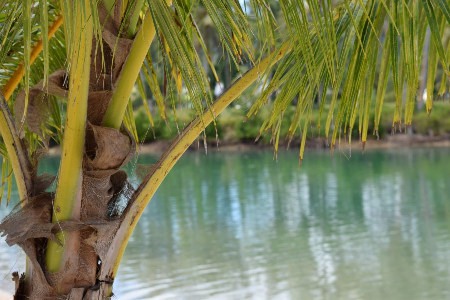 Vanuatu YJ0COW Erakor Lagoon.