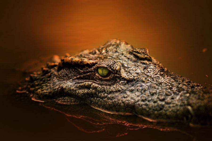 Вьетнам 3W2R Туристические достопримечательности Фото крокодила.