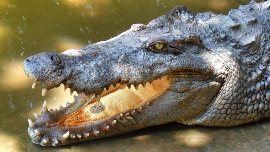 Вьетнам 3W3TY Туристические достопримечательности Крокодил.