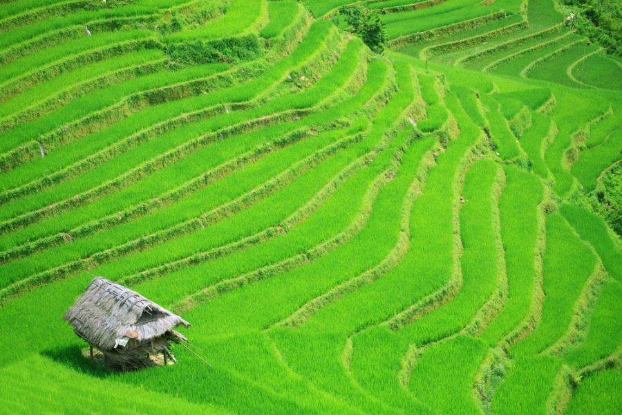 Vietnam XV2CJB DX News Rice field terraces at northern Vietnam