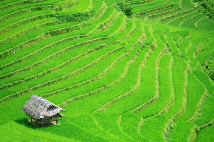 Вьетнам XV2CJB DX Новости Рисовые поля на террасах Северный Вьетнам