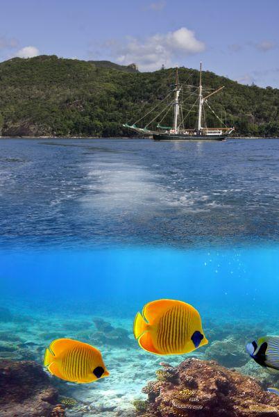 Остров Уитсанди Острова Уитсанди VK4EI/P Подводный мир.