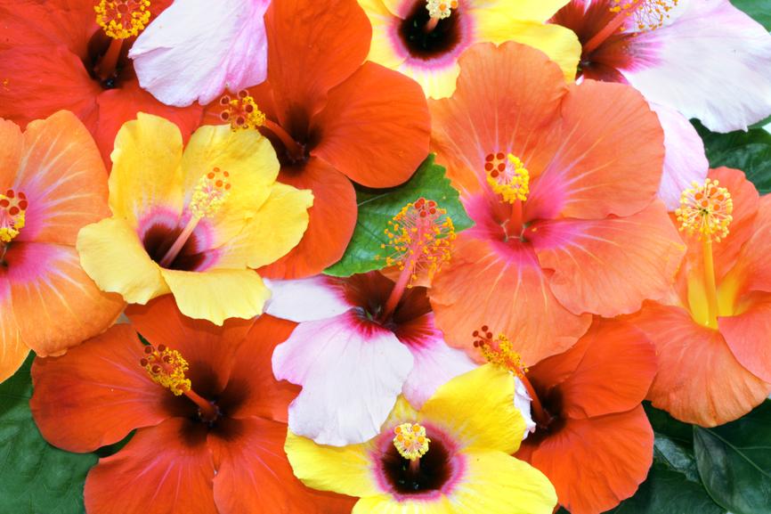 Остров Янгета Острова Ясава 3D2YA Туристические достопримечательности Фиджи