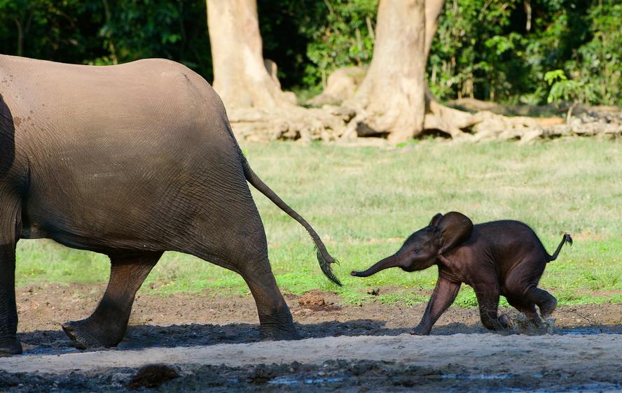 Zambia 9I50BO Tourist attractions For mum