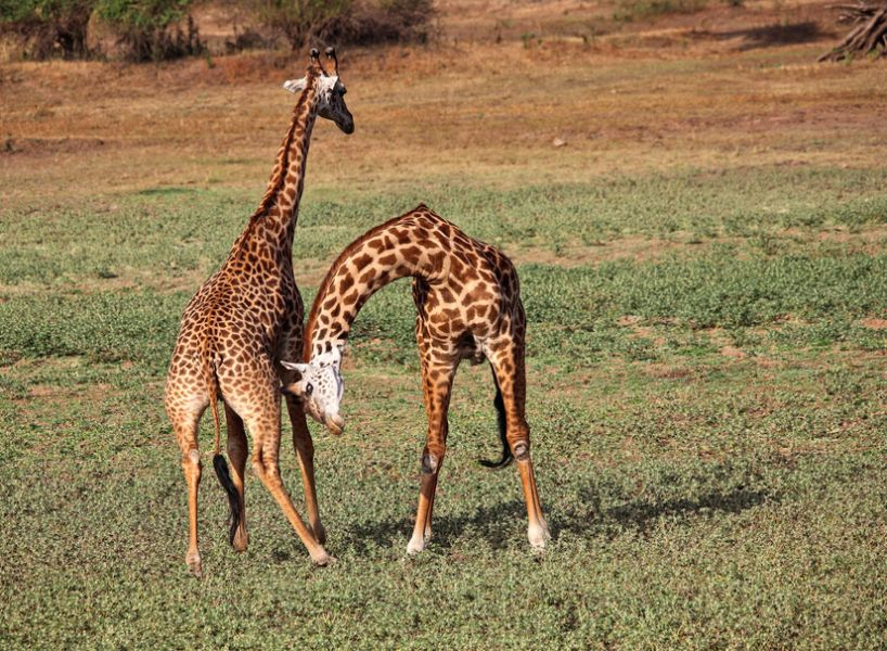 Замбия 9J2HN Туристические достопримечательности