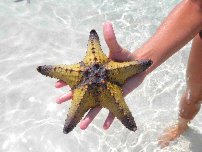 Остров Занзибар 5H1JRI Туристические достопримечательности