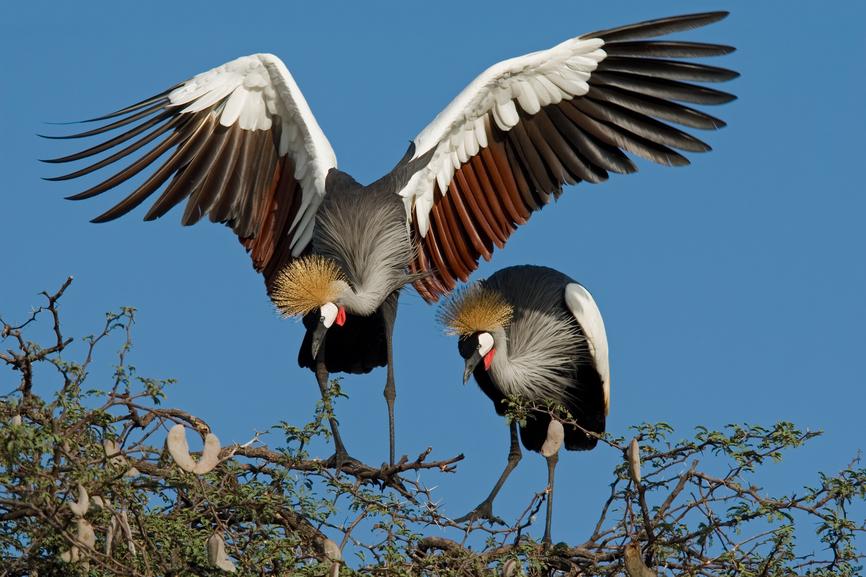 Зимбабве Z21MG Туристические достопримечательности