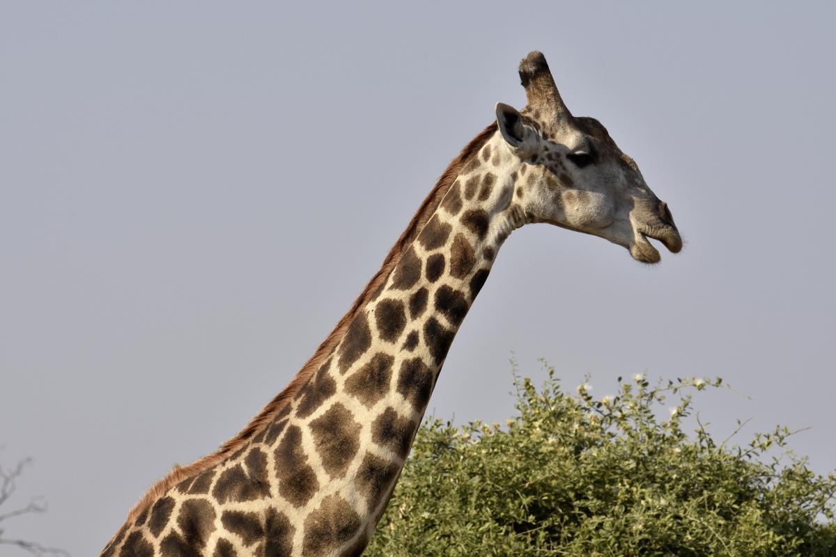 A21EME Ботсвана