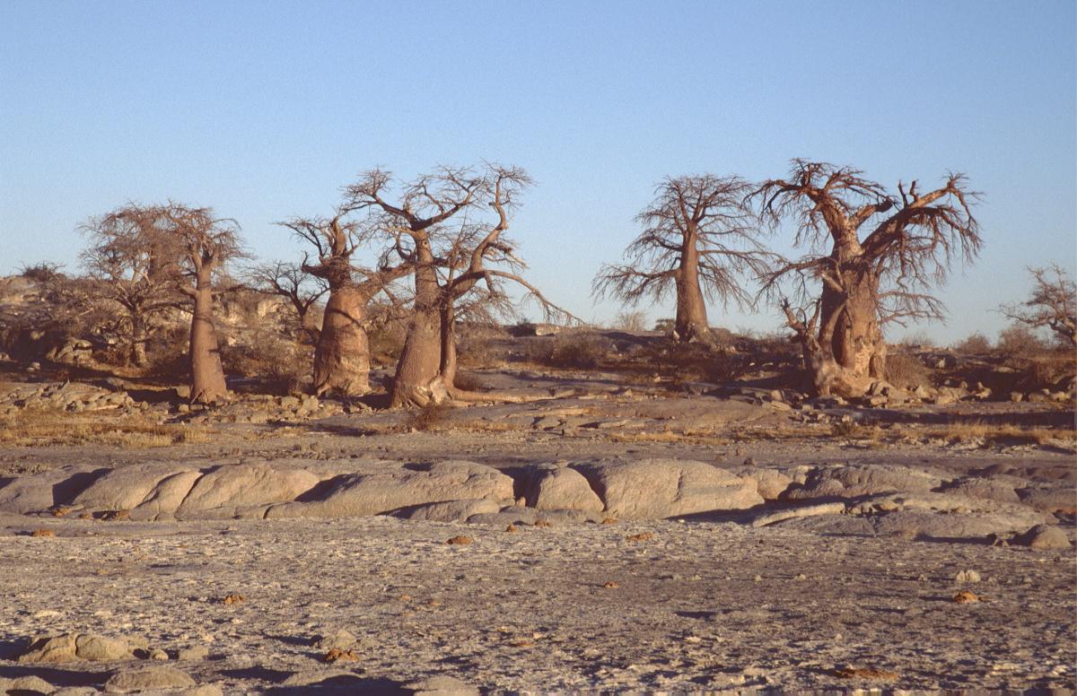 A25JK Botswana DX News Mmatshumo