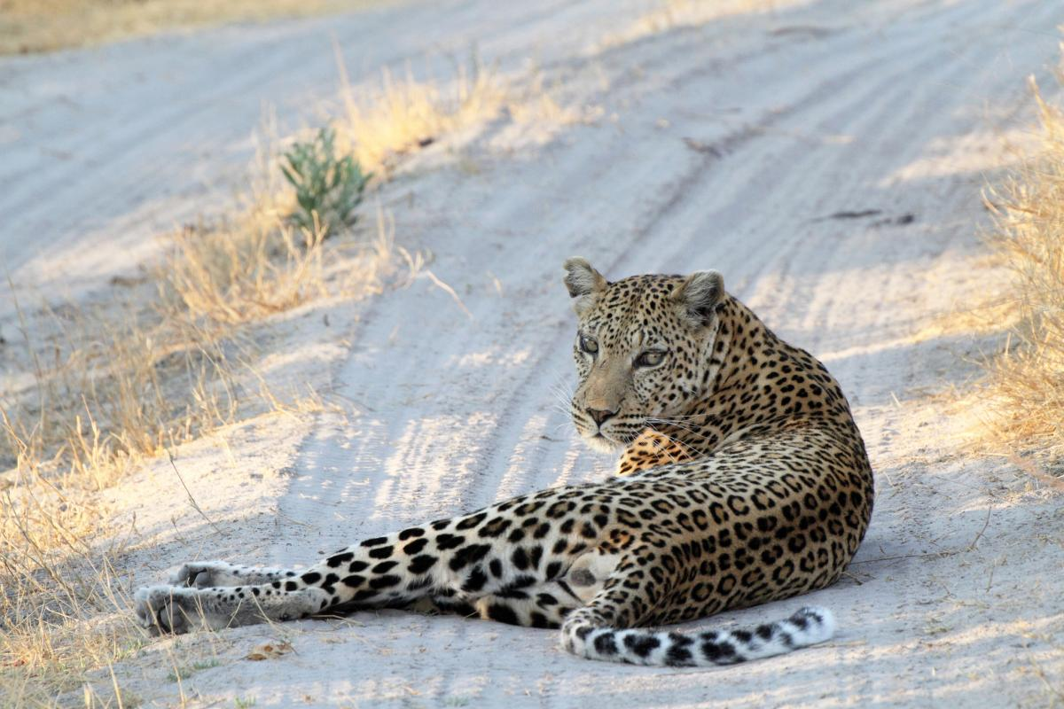 A25JK Botswana Tourist attractions spot Moremi Game Reserve
