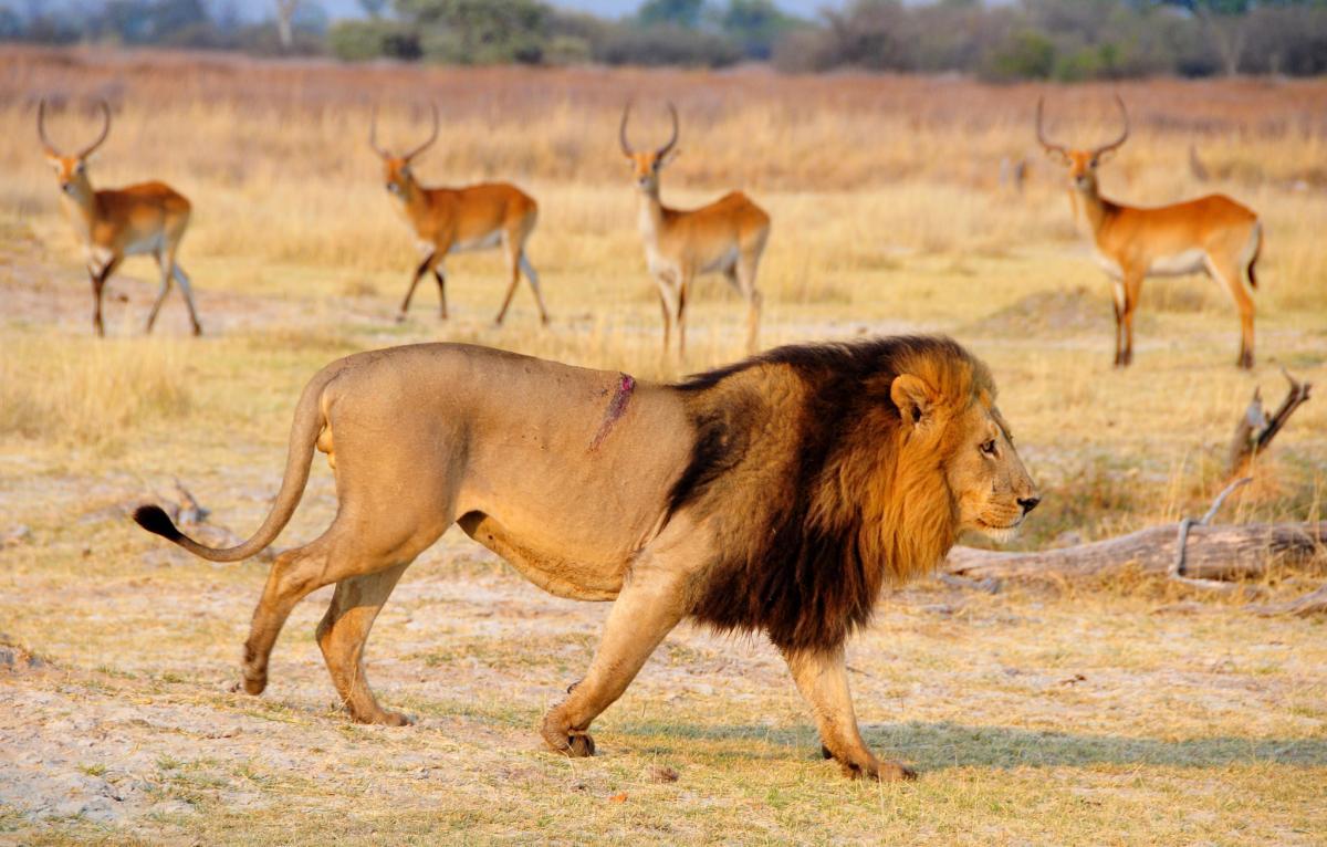 A25JK Botswana Moremi Reserve