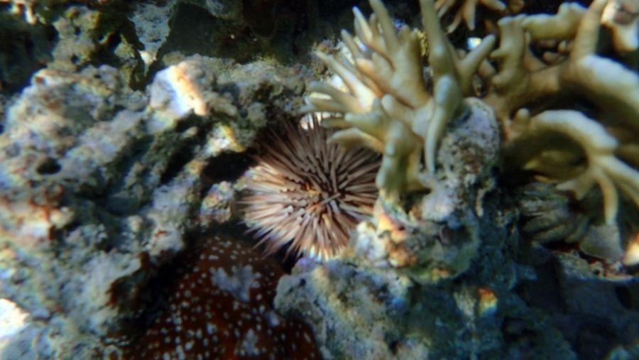 Остров Аитутаки Красоты подводного мира Морской еж