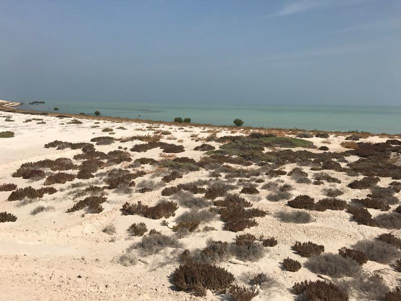 Остров Аль Сафлая A70X