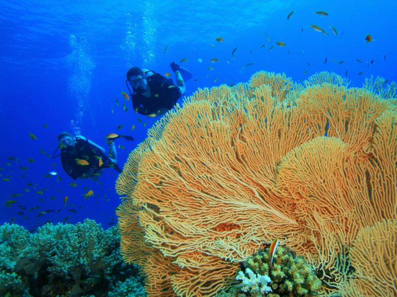 Andaman Islands VU4YC DX News Diving