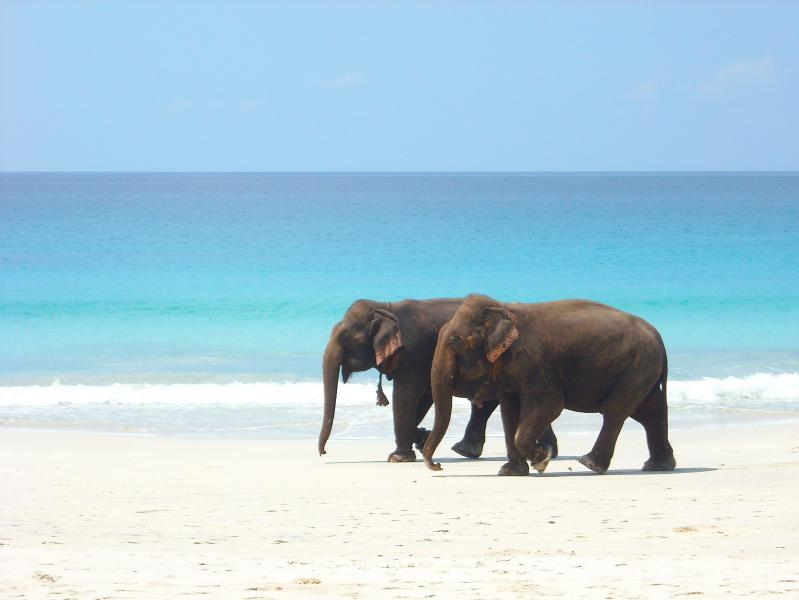Andaman Islands VU4YC Tourist attractions spot Radhagar Beach, Havelock Island