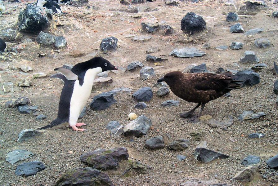 Антарктида KC4/N2TA Туристические достопримечательности