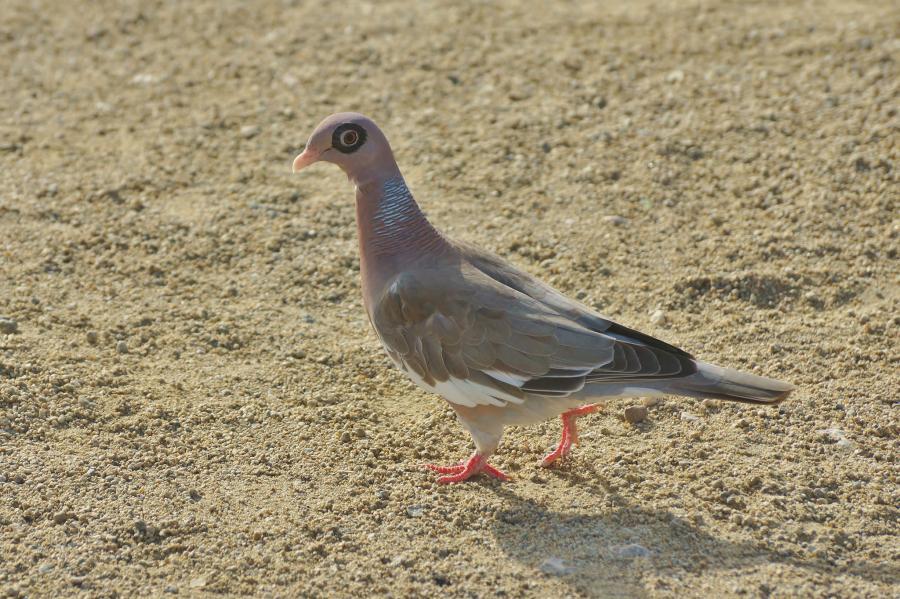 Aruba P4/JS3LSQ DX News Dove