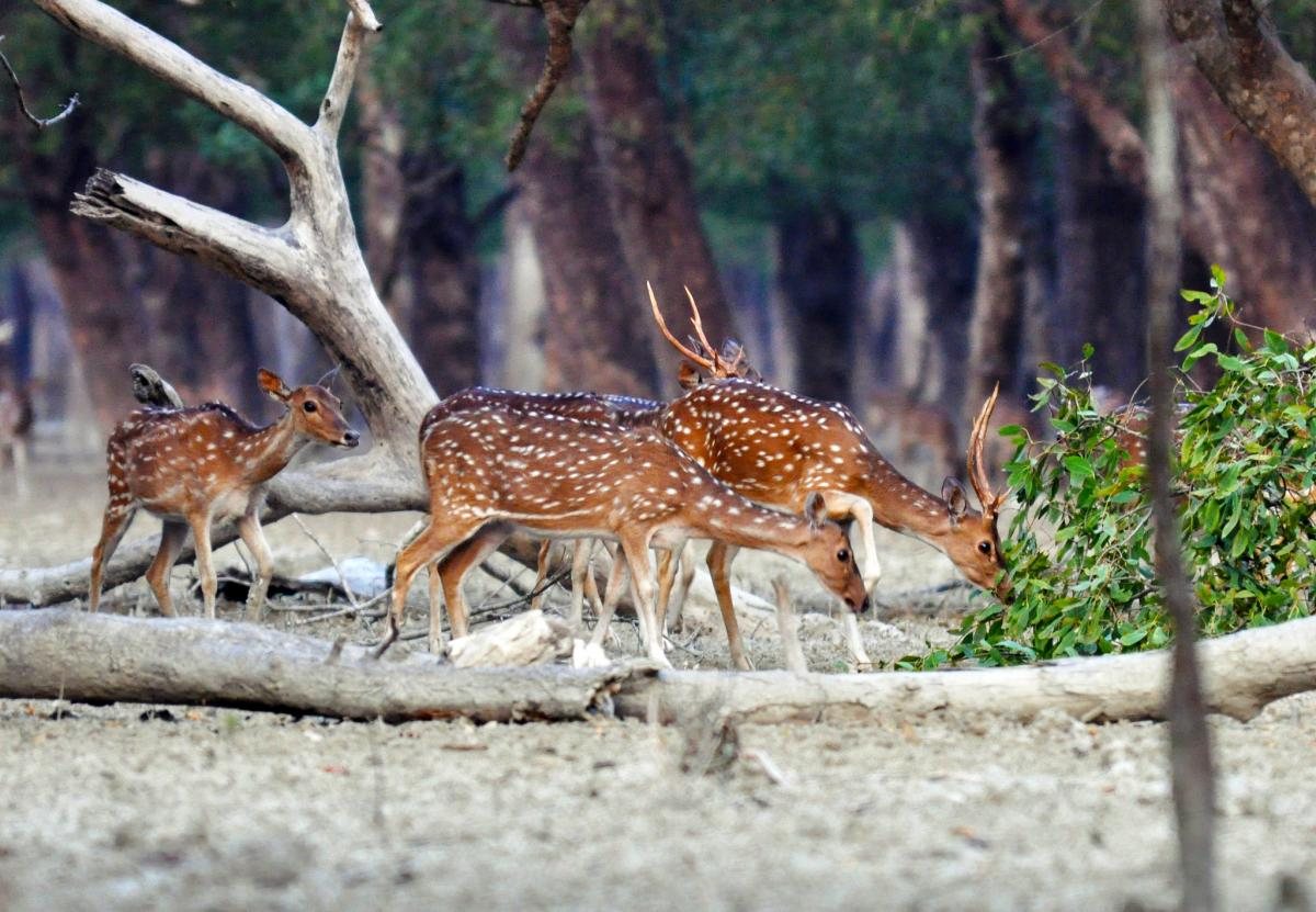 Bangladesh S21ZBD Tourist attractions spot Sunderban