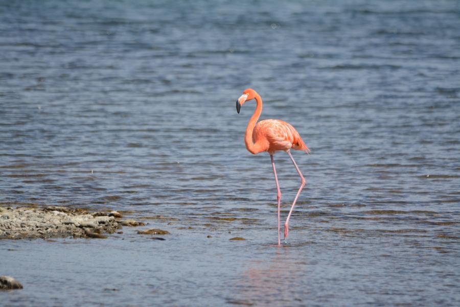 Bonaire Island PJ4/N5JR PJ4/K5JP PJ4/NT5V Tourist attractions spot