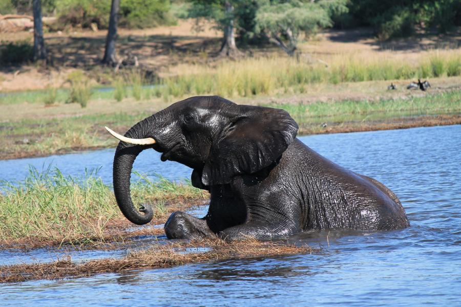 Botswana A25AL DX News Chobe National Park