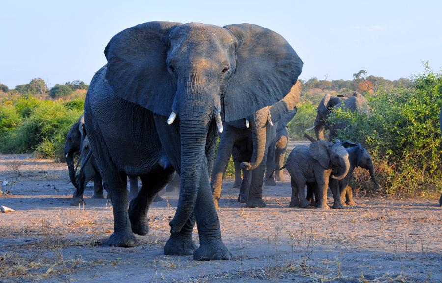 Botswana A25AL Tourist attractions spot Chobe National Park