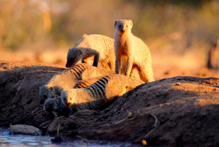 Botswana A25BI A25SP A25BE Mashatu Game Reserve located in the Northern Tuli Game Reserve