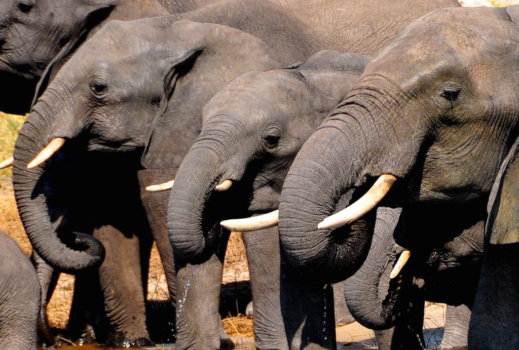 Botswana A25TVB Tourist attractions spot Elephants, Chobe National Park, Kachikau