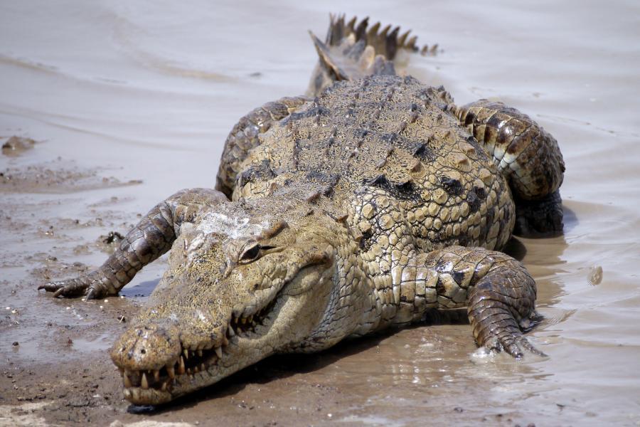 Буркина Фасо XT2AGI DX Новости Крокодил.