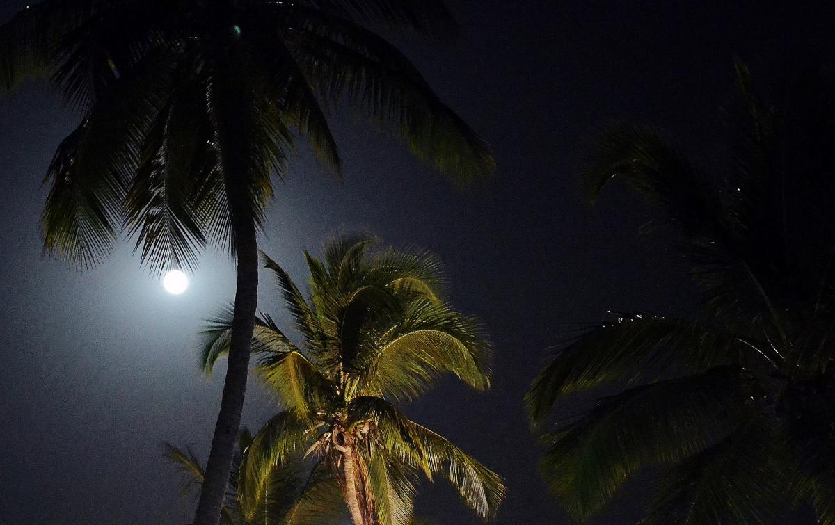 C56VC Moonlight and palm trees, Gambia.