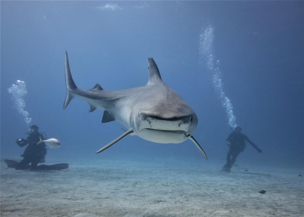 C6A/DD0VR Tiger Beach, The Bahamas DX News
