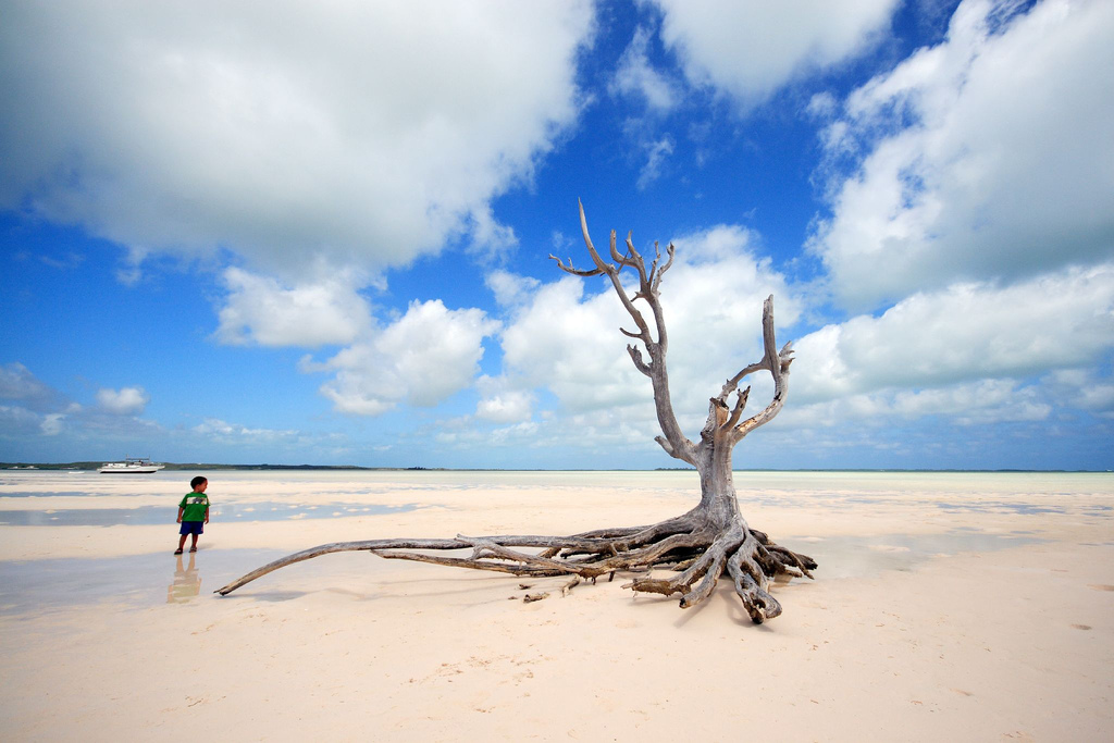 C6AKT The lone tree, Eleuthera Island DX News