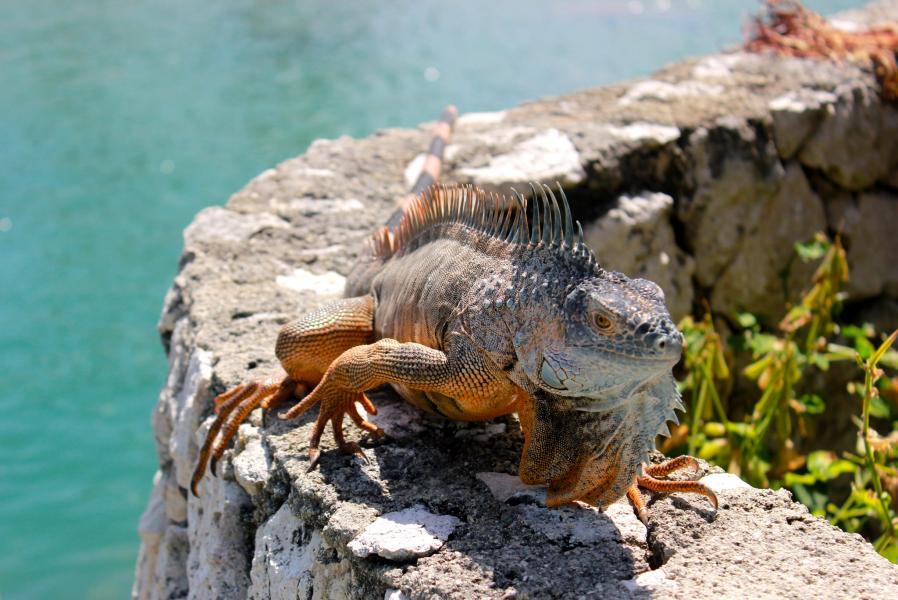 Каймановы острова ZF2ZB Туристические достопримечательности