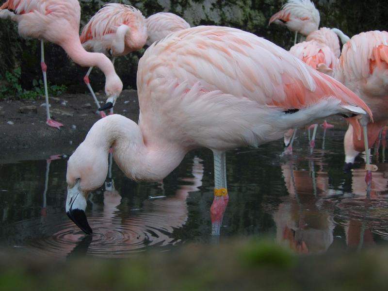 Чили CE2LML XR2K Туристические достопримечательности Фламинго.