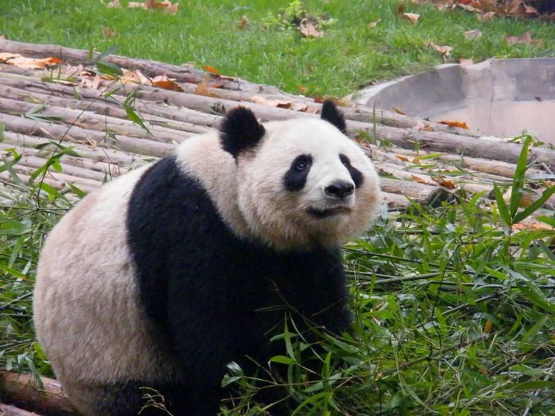 China BA4TB DX News Panda