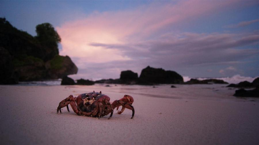 Christmas Island VK9XI Tourist attractions spot Red crab, Dolly Beach.