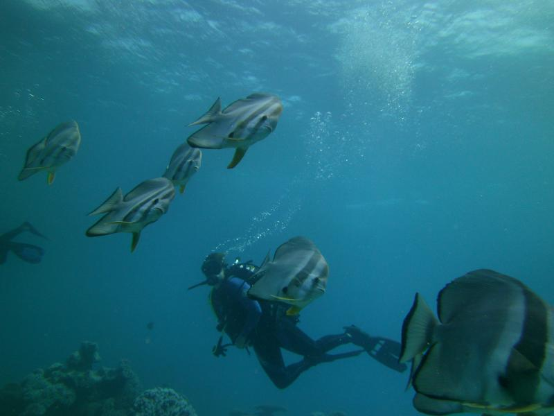Cocos Keeling Islands VK9CZ DX News Batfish