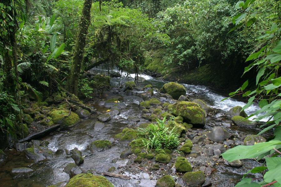 Costa Rica TI5/N5BEK Tourist attractions spot River and Rainforest, La Paz.