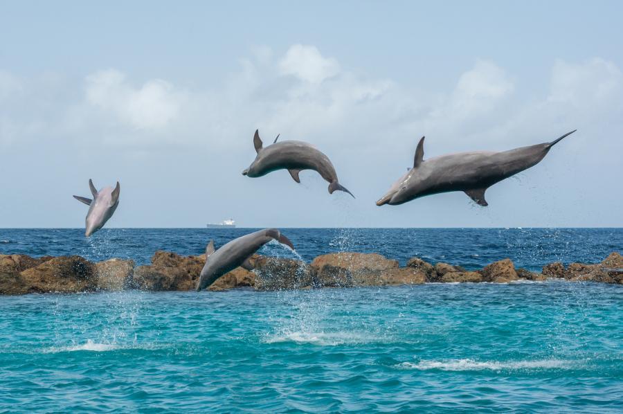 Curacao PJ2/KB7Q DX News Dolphins