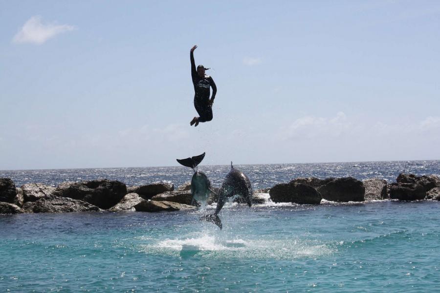 Кюрасао PJ2/N1ZZ Дельфины