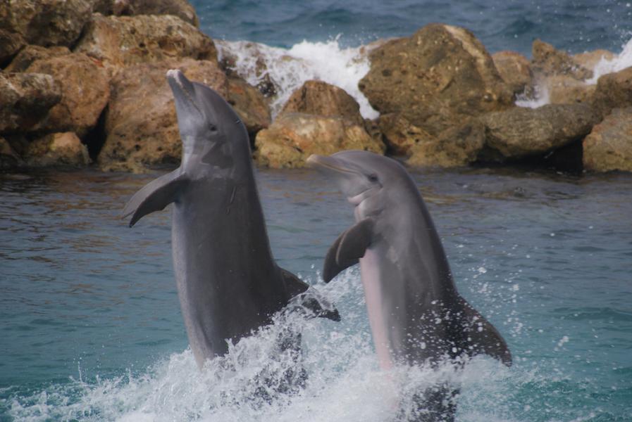 Curacao PJ2/OE3GEA Dolphins