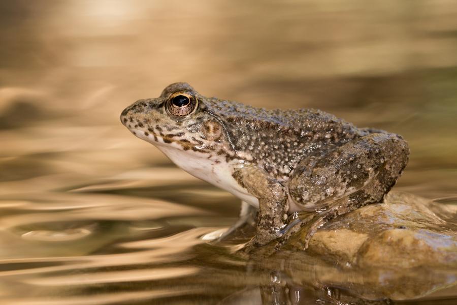 Cyprus 5B/HA5PP Tourist attractions spot Marsh frog.