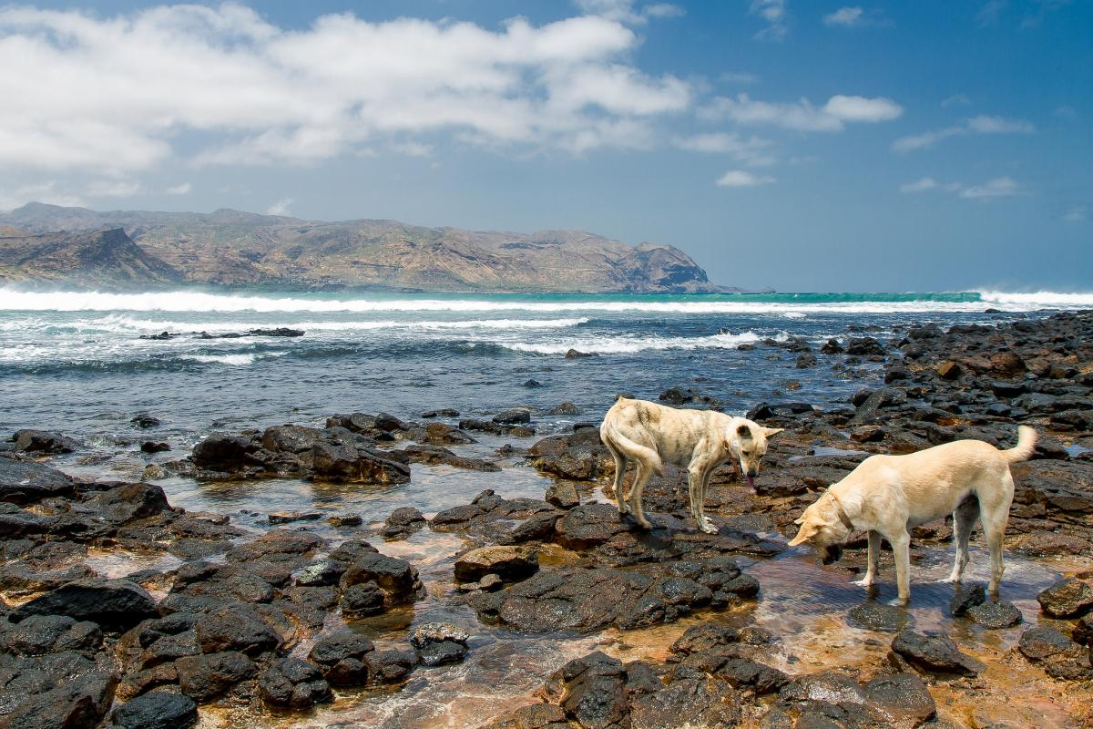 D44KF Dogs fishing, Santiago Island, Cape Verde, Cabo Verde. Tourist attractions spot