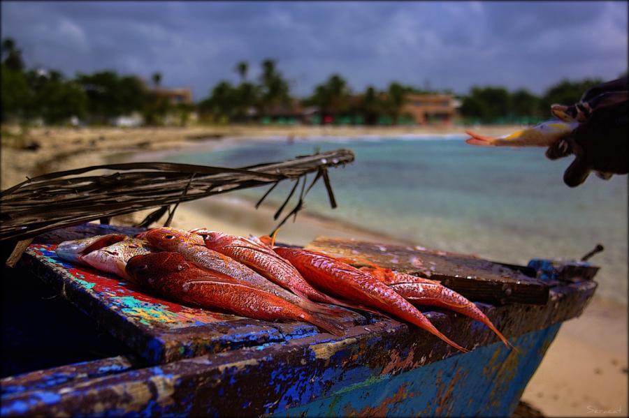 Доминиканская Республика HI3AA DX Новости Хуан Долио.