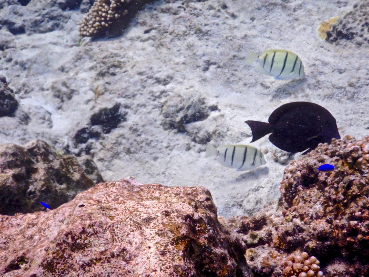 E6Y Алофи, остров Ниуэ. DX Новости