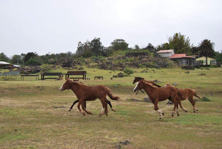 Easter Island CE0Y/NO9E Tourist attractions spot Wild horses.