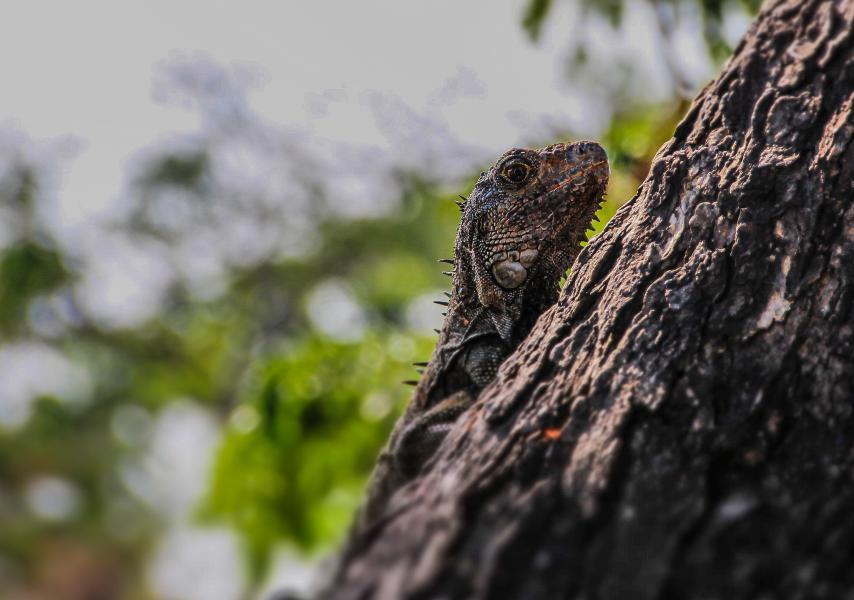 Ecuador HC2HGT Dragon