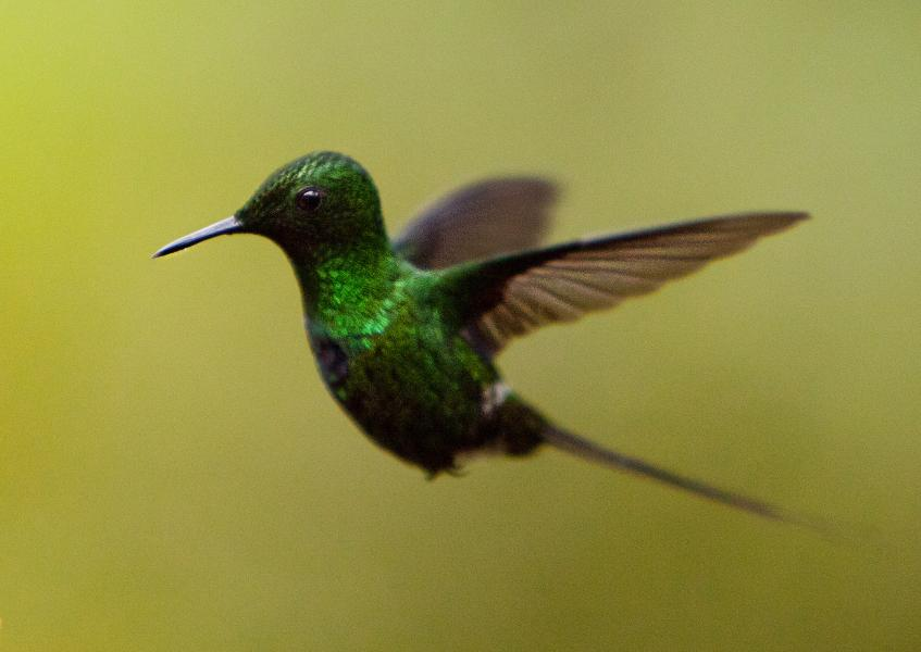 Ecuador HC5DX Tourist attractions spot Hummingbird, Mashpi Lodge
