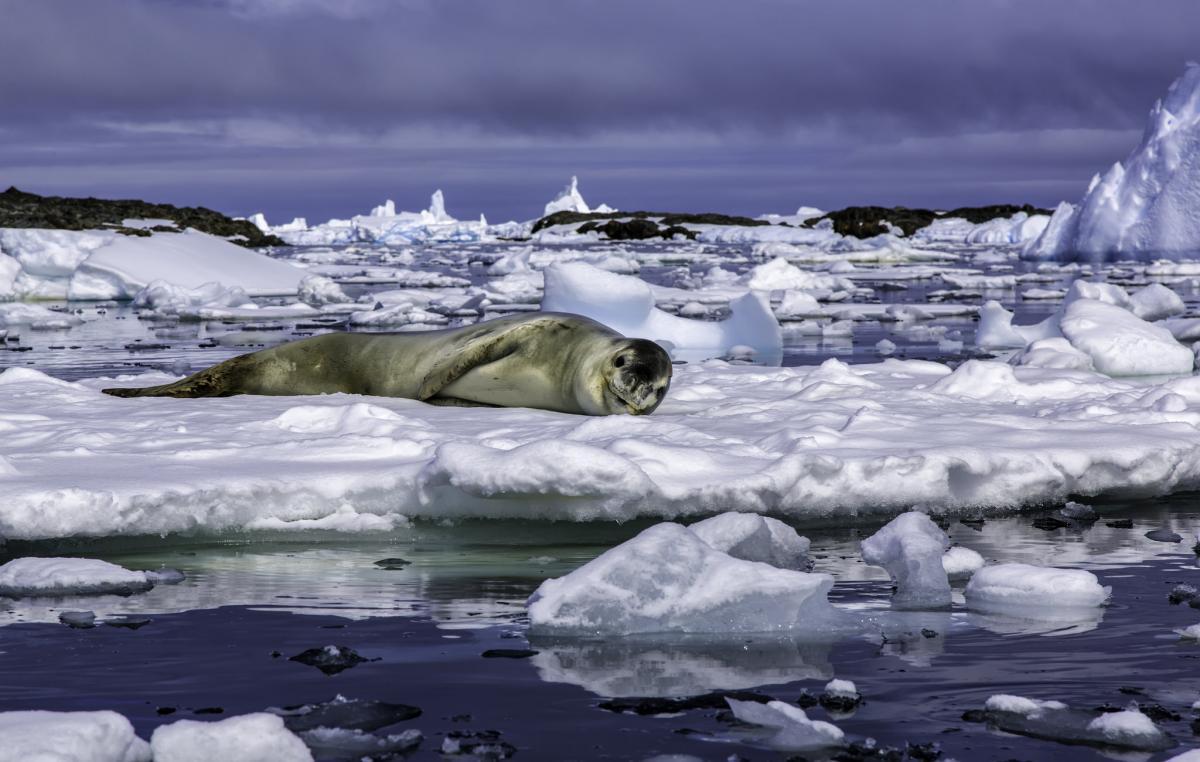 EM1UA EM1U Остров Галиндез, острова Биско, Антарктида.