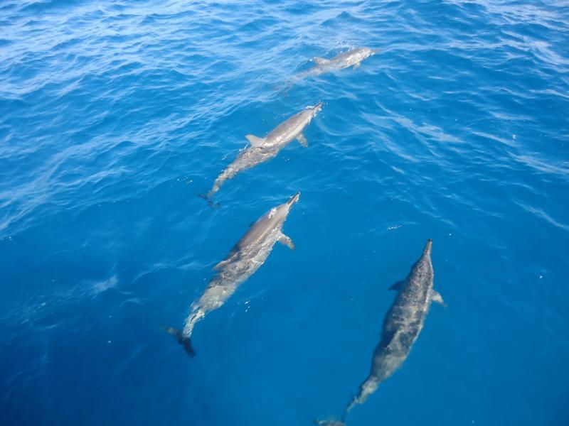 Остров Фернанду ди Норонья PY0F/PV8IG Туристические достопримечательности Бая дос Поркос Дельфины.